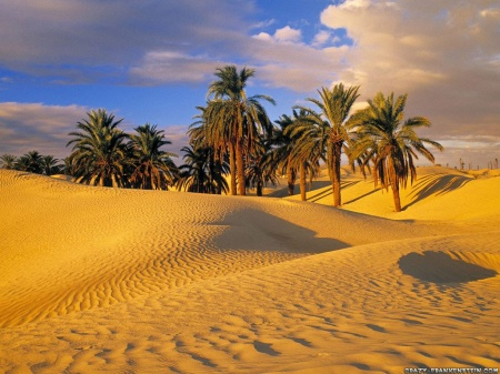 desert-oasis-tunisia-wallpaper